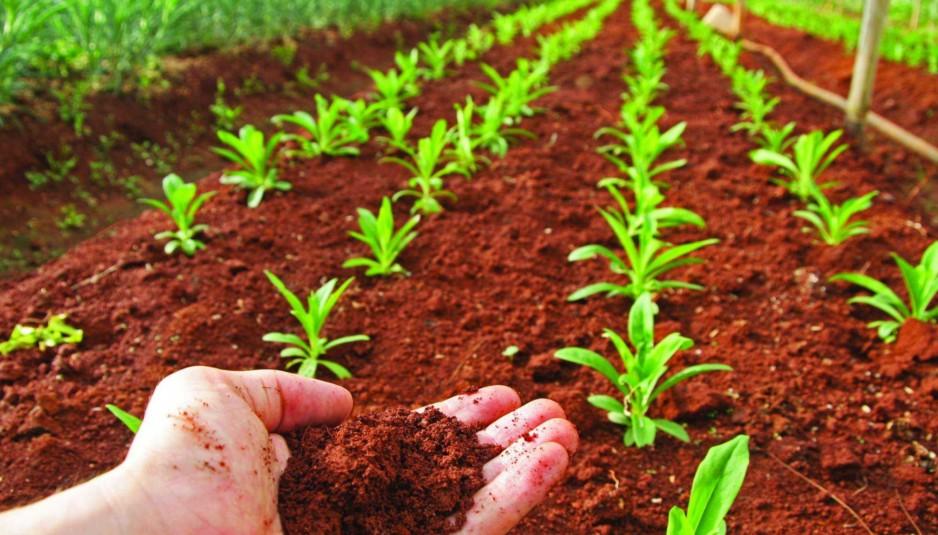 7 de julio d a de la conservaci n del suelo huella minera for A que se denomina suelo